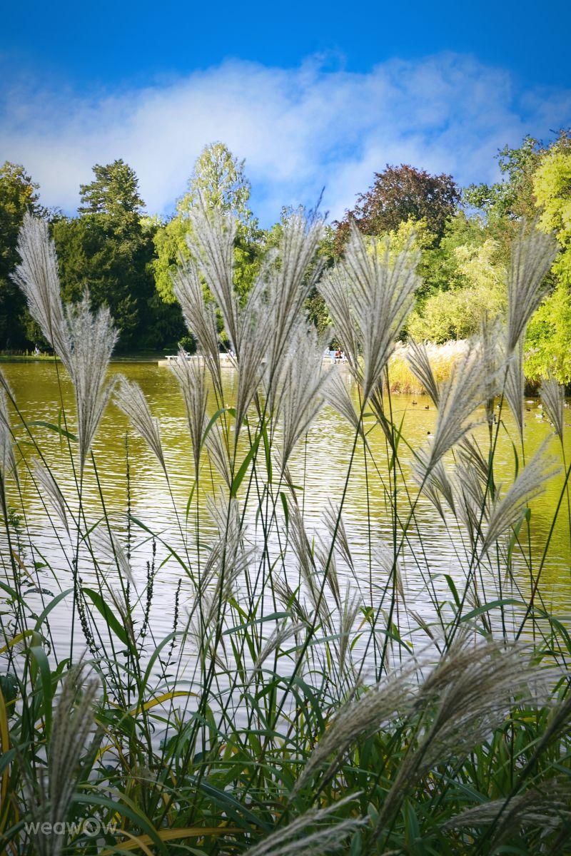 Fotógrafo Alexsandro, Fotos sobre el clima en Schlossgartensee - Weawow