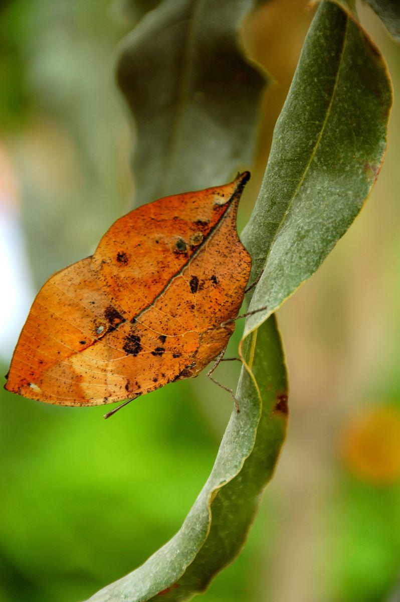Photographe Fabri, Photos météo à Casa delle Farfalle - Weawow