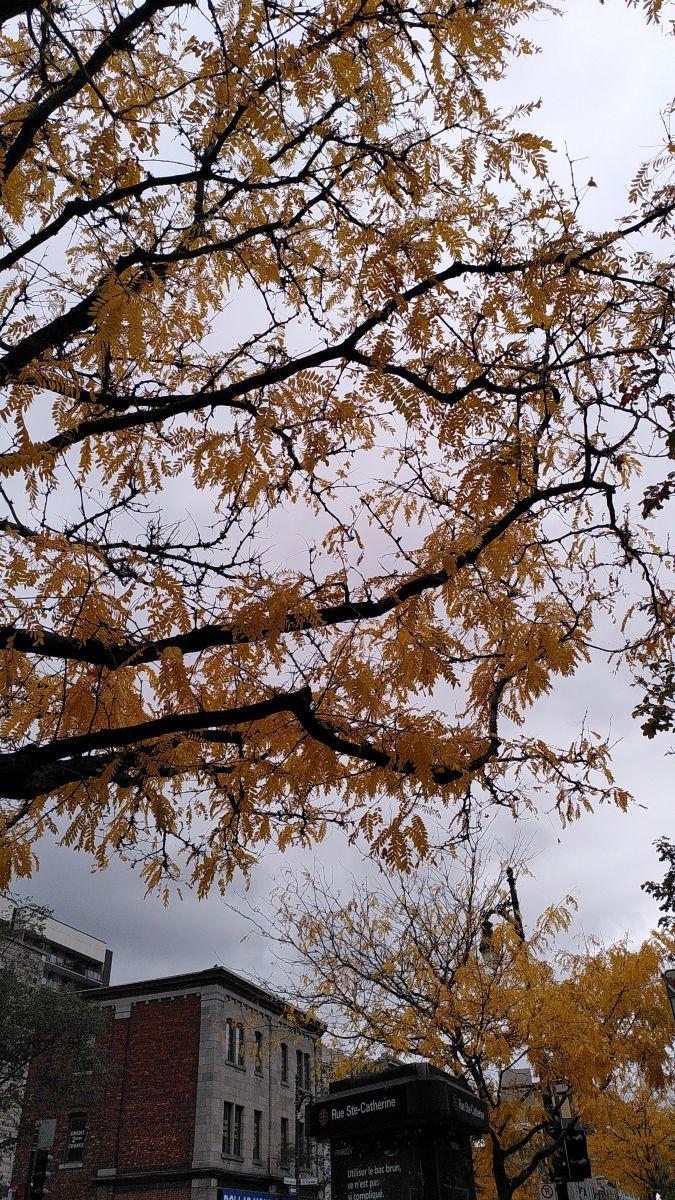 写真家 Koikoi、モントリオールの天気写真 - Weawow