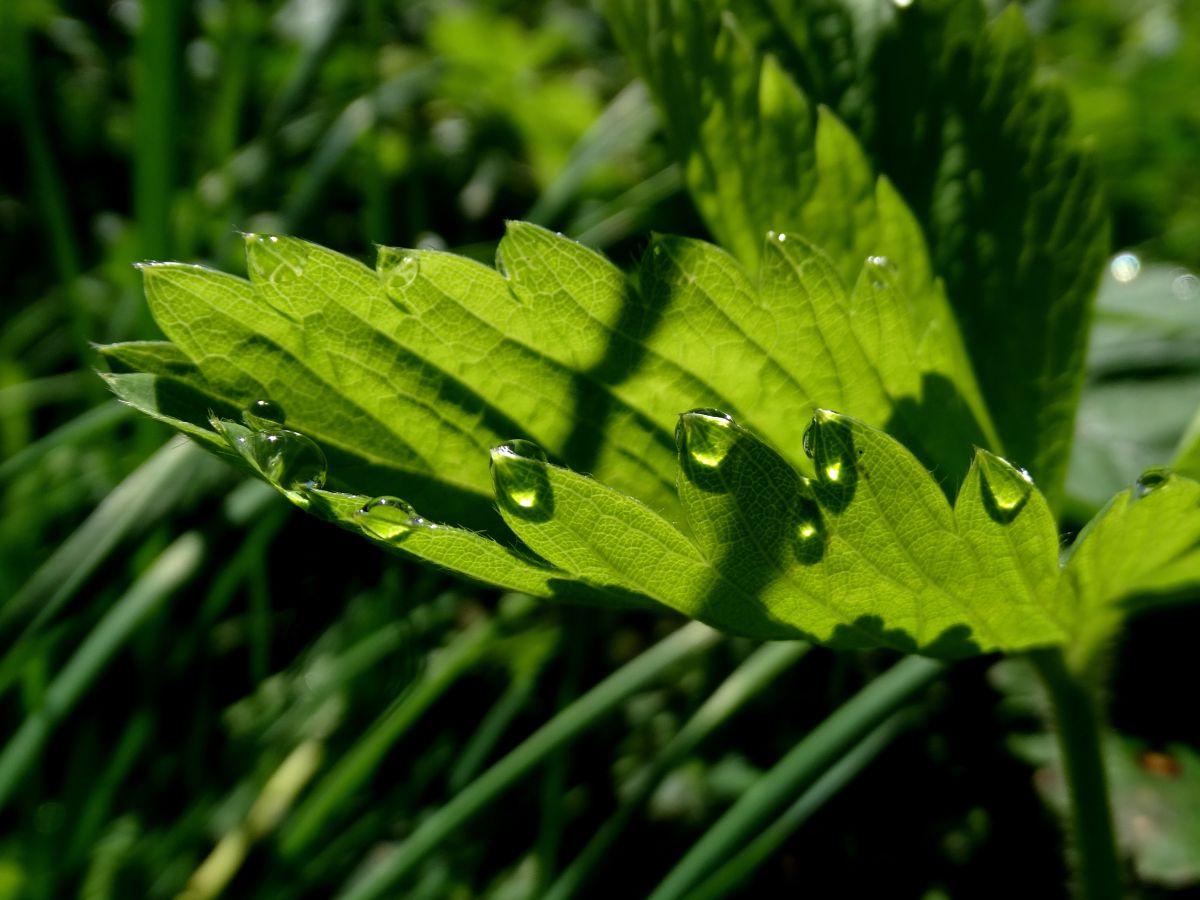 Fotos sobre el clima en Mundo. Pronósticos del tiempo con hermosas fotos de Михаил Гавриков