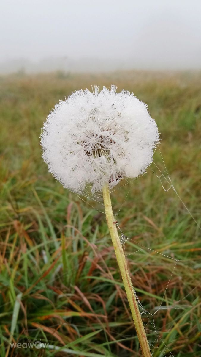 Fotógrafo kns666, Fotos sobre el clima en Nassington - Weawow