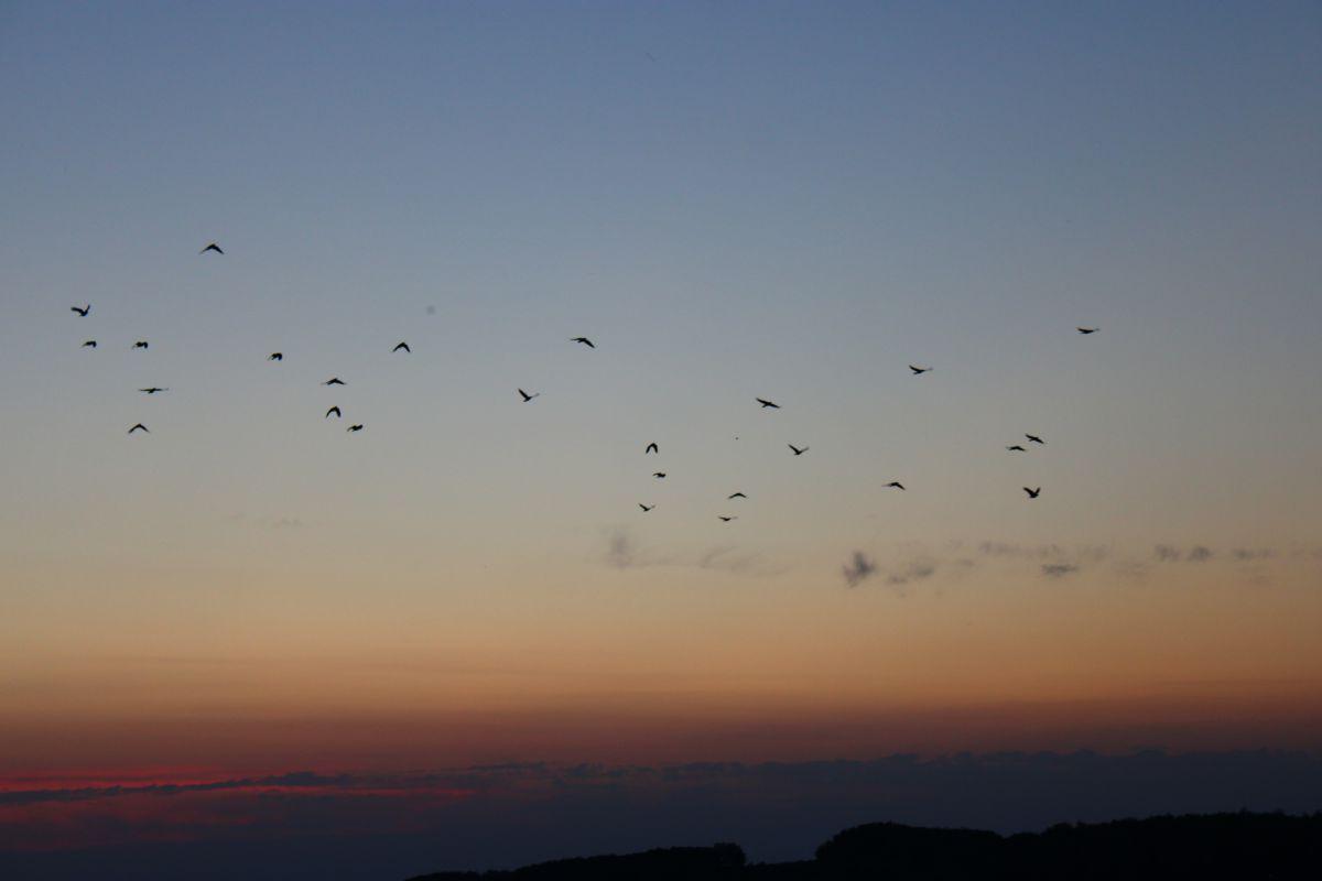 写真家 Sheni、Silistraの天気写真 - Weawow