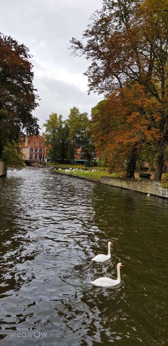 Photographe Anastasija Ozueh, Photos météo à Bruges - Weawow
