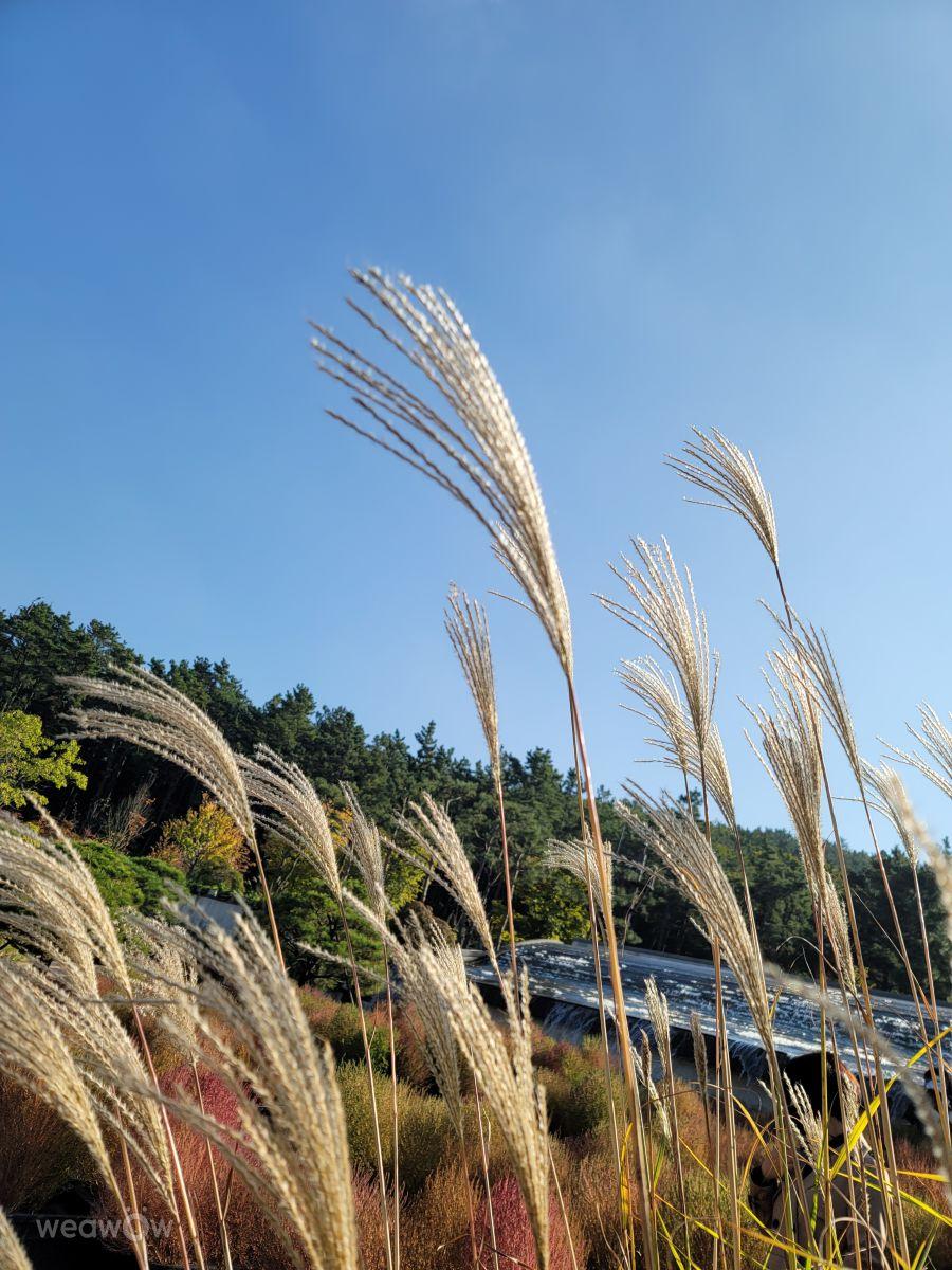 マーケットプレイスの天気写真. sungsikkangの美しい写真による天気予報