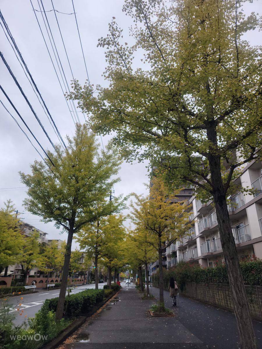 Fotógrafo yamap-, Fotos sobre el clima en Chiba-shi - Weawow