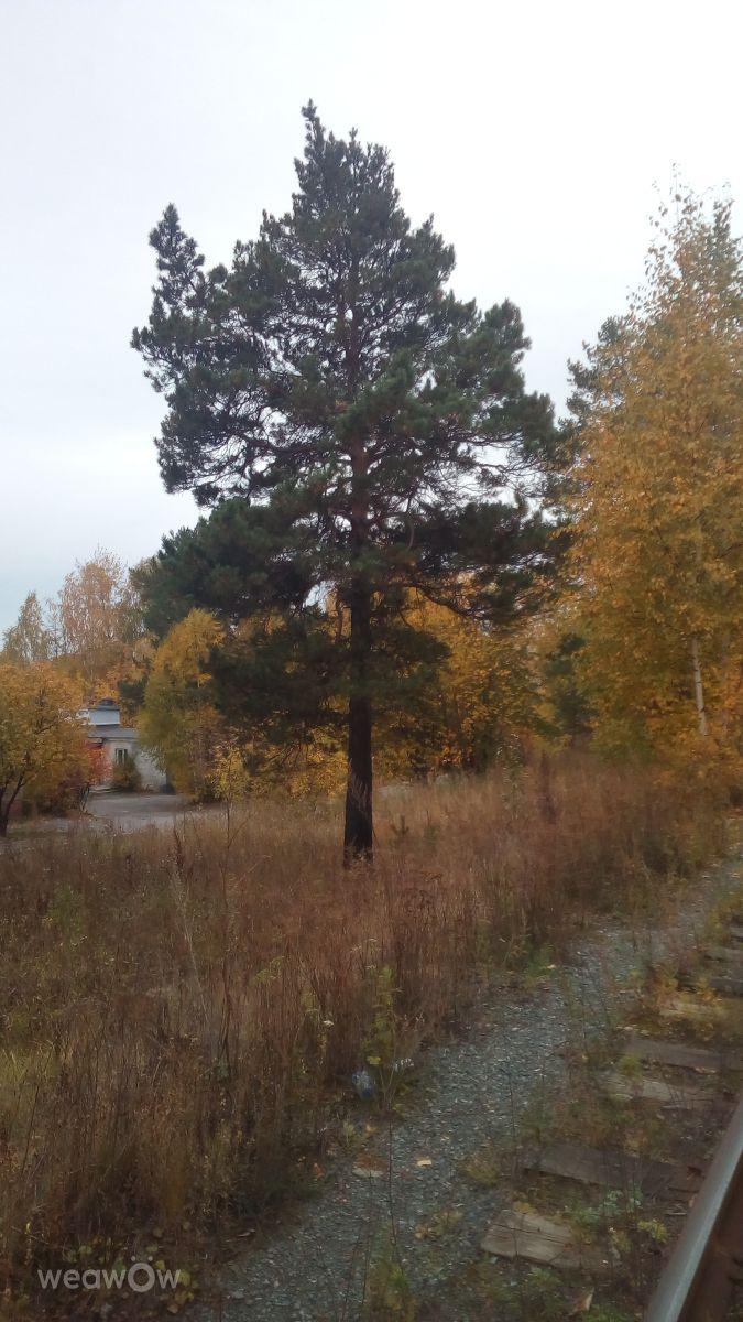 Fotos do tempo em Pervouralsk. Previsões do tempo com lindas fotos de Blitz