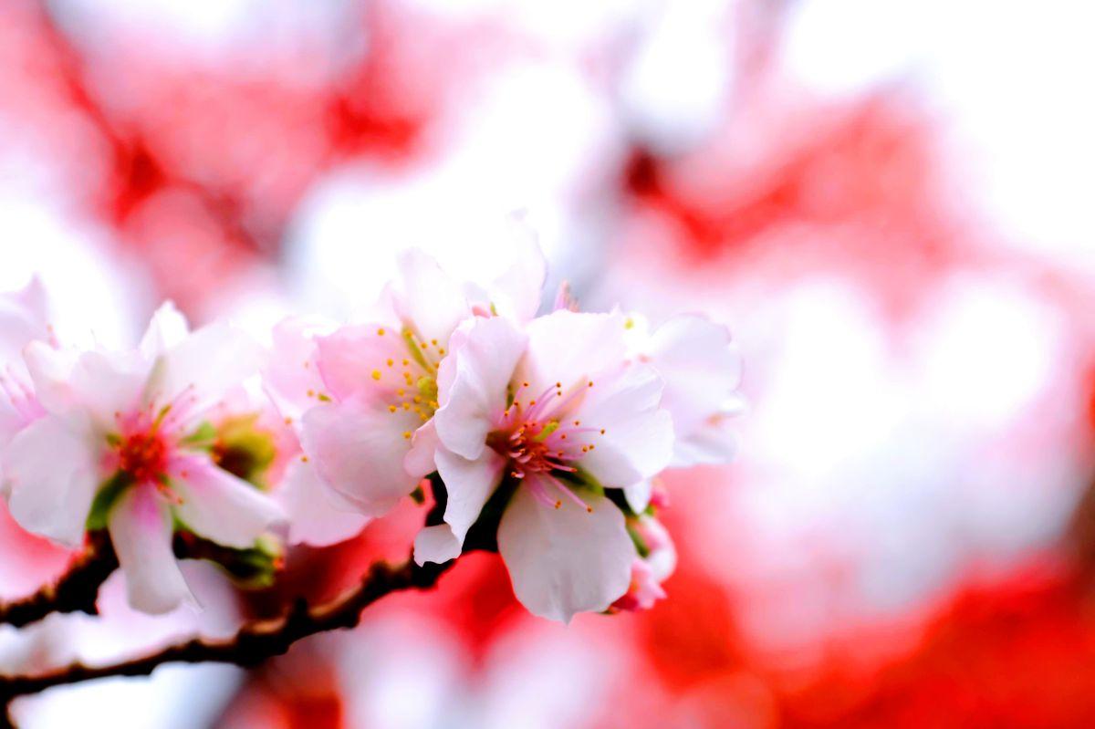 写真家 y-arai、桜山公園の天気写真 - Weawow