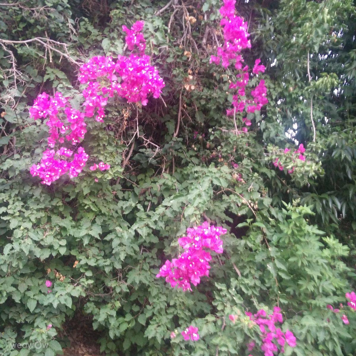 Qiryat Yam的天气照片. 天气预报,带Tom22san精美的照片