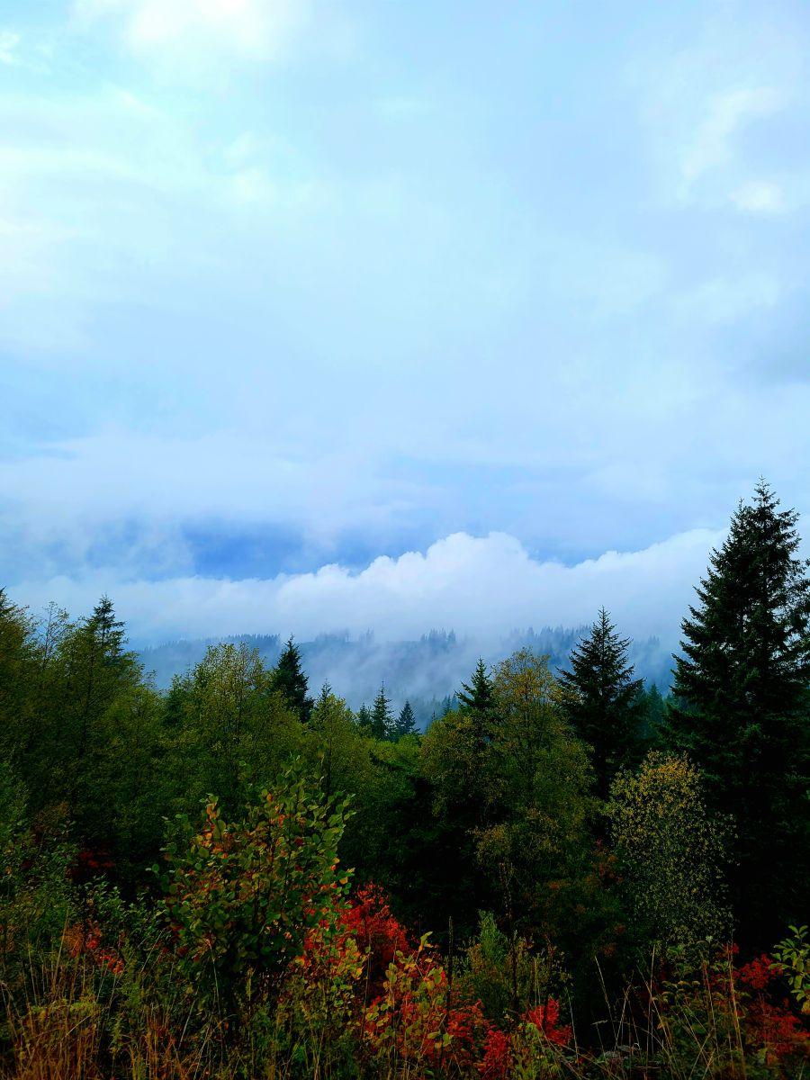 写真家 deboraoneill、Camasの天気写真 - Weawow