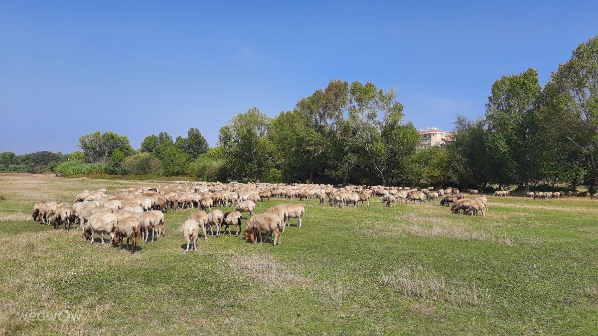 写真家 Mirandel、ローマの天気写真 - Weawow