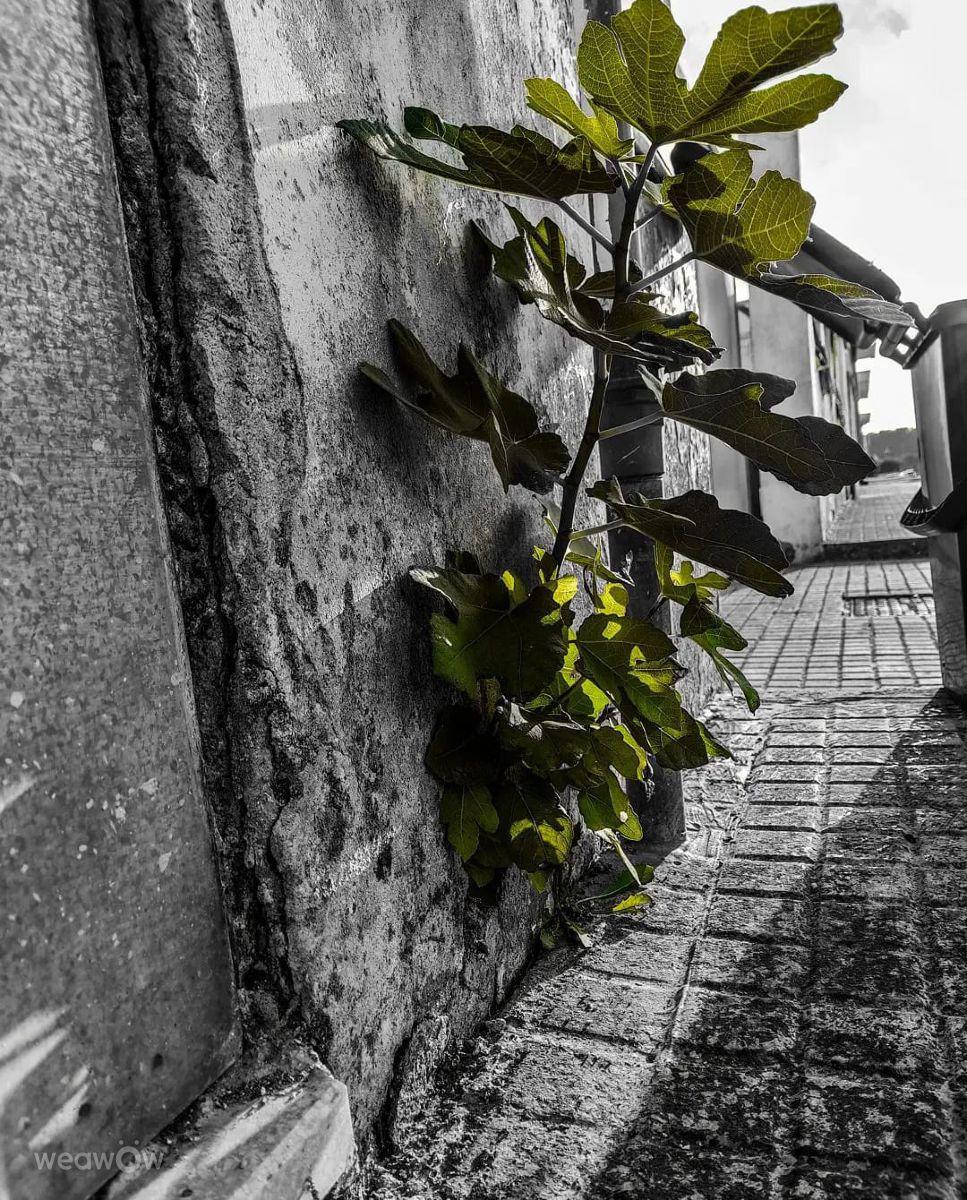 Photographe Gianninoia, Photos météo à Calimera - Weawow