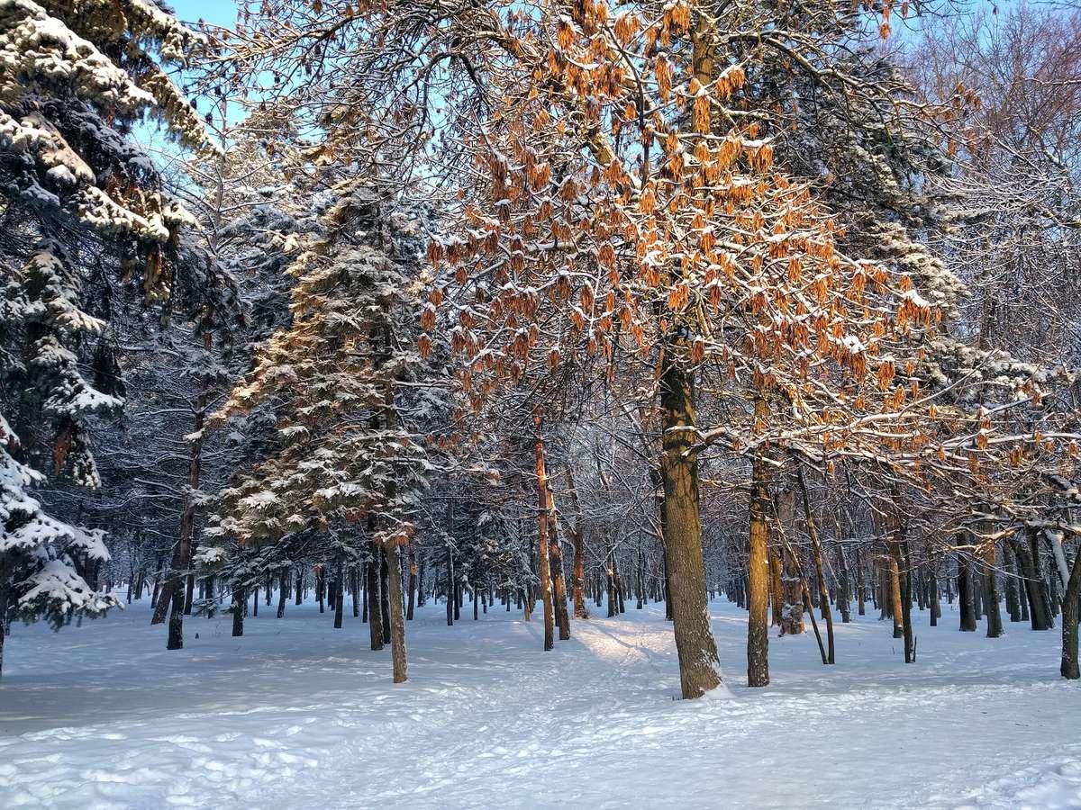 Fotos do tempo em Novocherkassk. Previsões do tempo com lindas fotos de Андрей Прынов