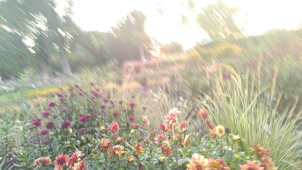 Fotógrafo Koikoi, Fotos sobre el clima en Montreal Botanical Garden - Weawow