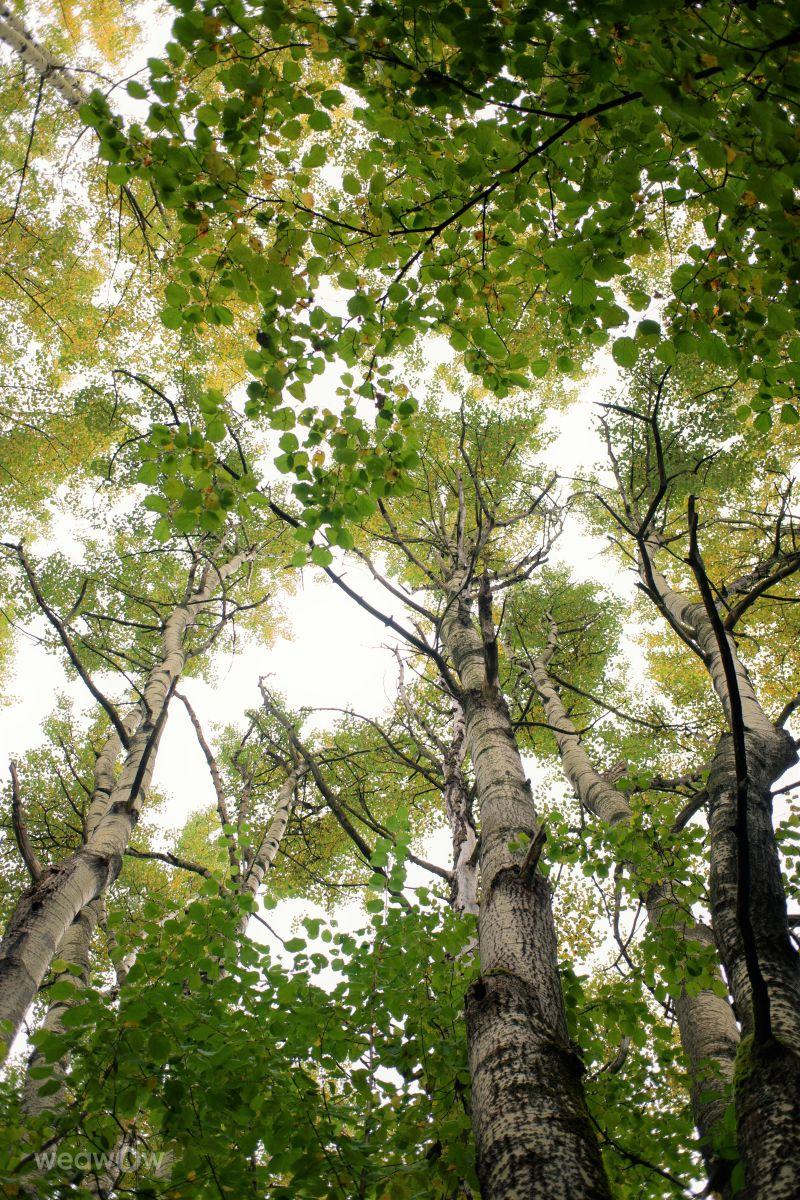 写真家 hejpetrpepa、Kašperské Horyの天気写真 - Weawow