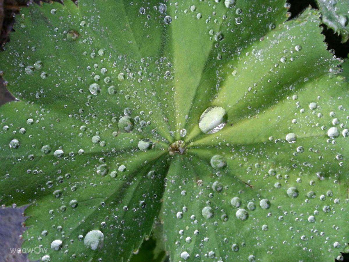 Photographe Jansky, Photos météo à Cottingley - Weawow
