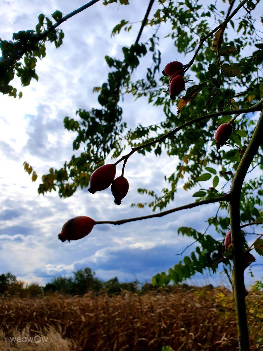 Fotógrafo _Pityu_, Fotos sobre el clima en Sárbogárd - Weawow