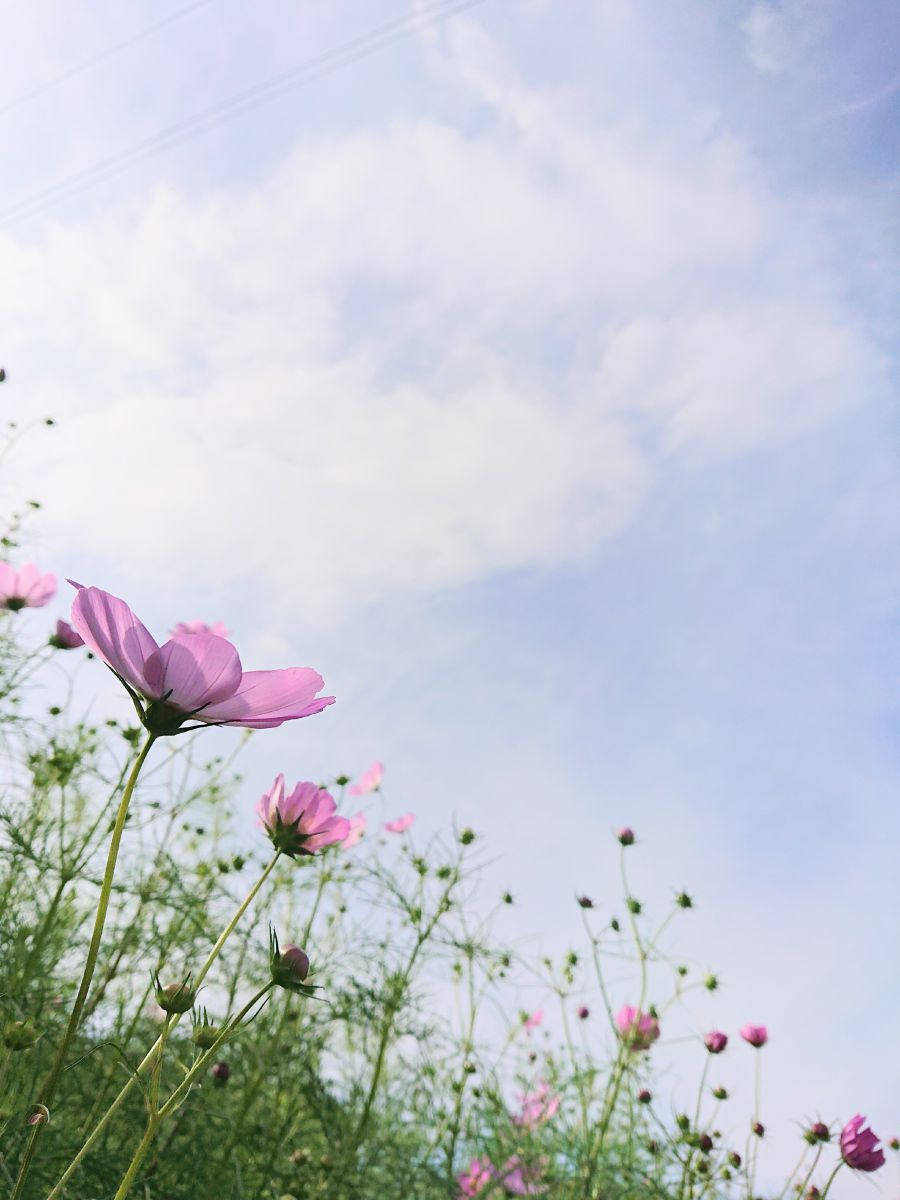Weather Photos in Tonami. Weather forecasts with beautiful photos by cocoron