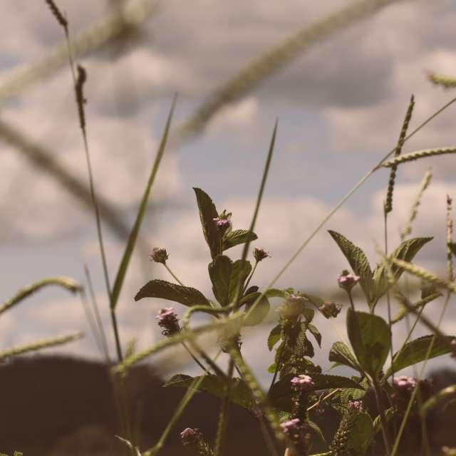 Flores e um céu nublado