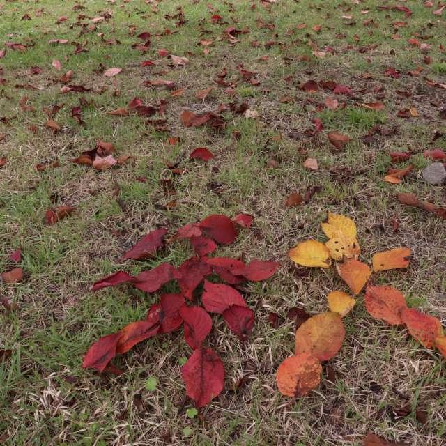 落ち葉のあき