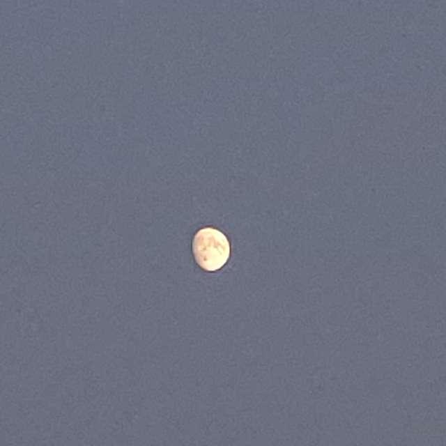 Evening moon 🌒