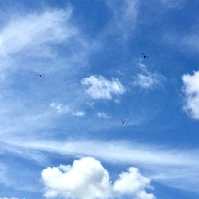 秋晴れの空、飛び交うトンボ