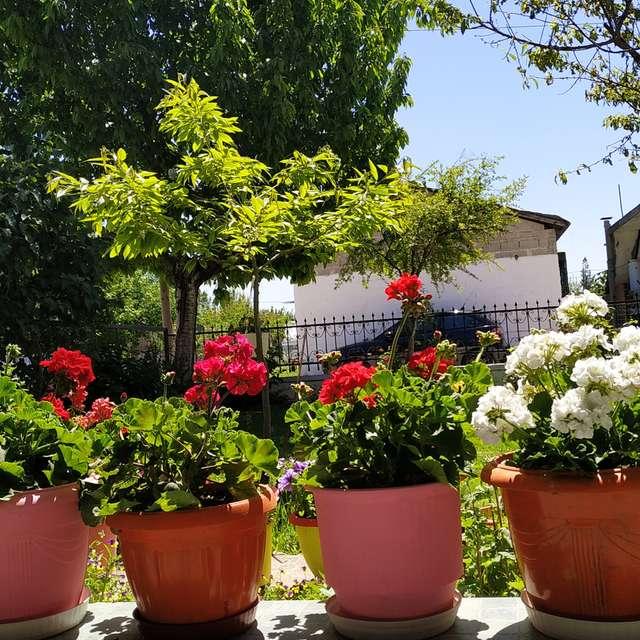 Spring at village