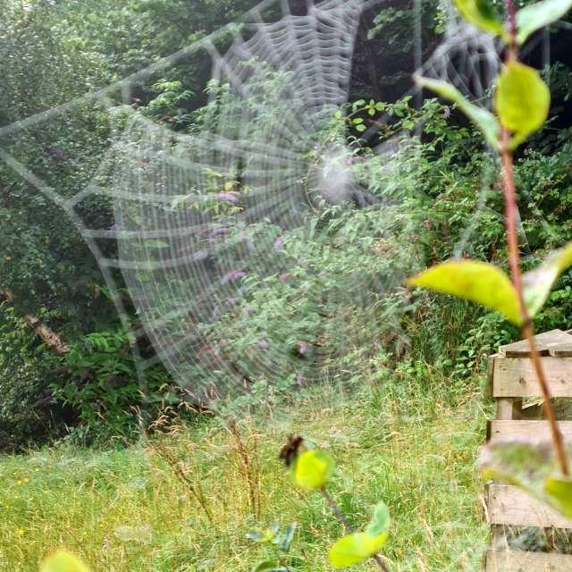 Cobwebs mist