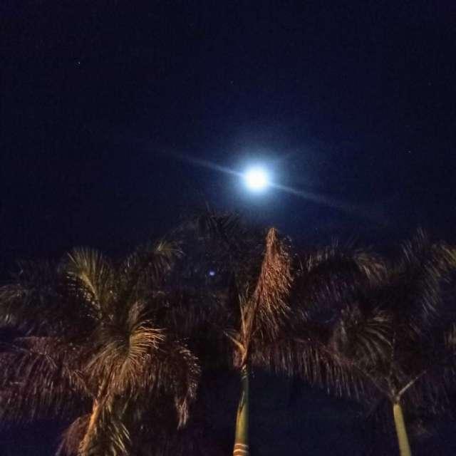 Luna y palmeras