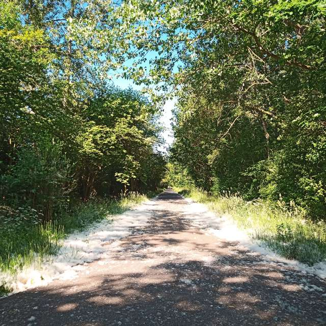 Camino de Polen.