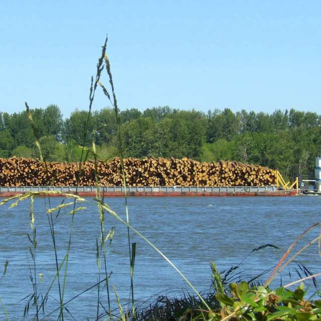 Tug Boat Pushing Logs