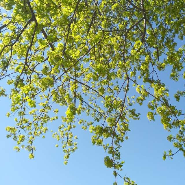 Солнечный весенний день