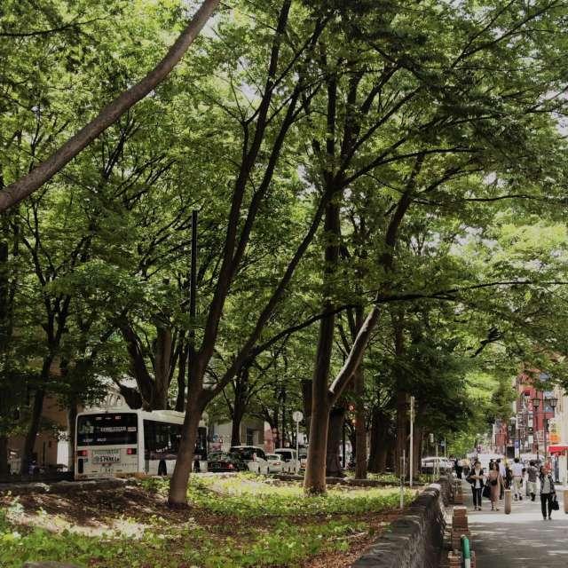 けやき並木 Keyaki street