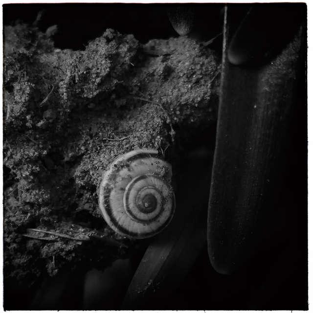 Land snail_02
