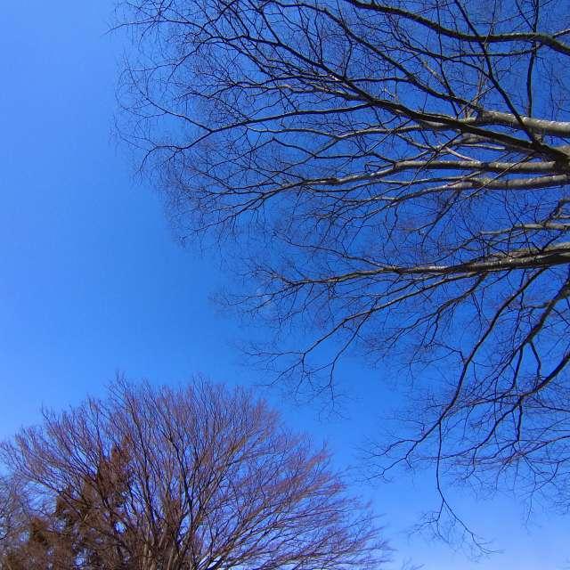 天の光を譲り合う植物の現象…「Crown Shyness」