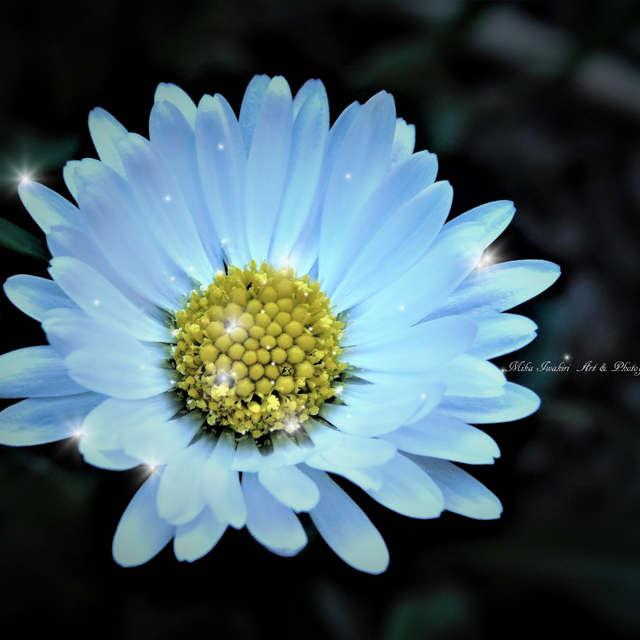 little beauty in the garden