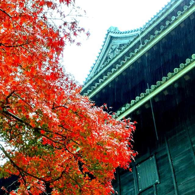 松江城と紅葉🍁