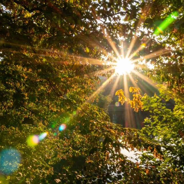 Beautiful rays of sunlight