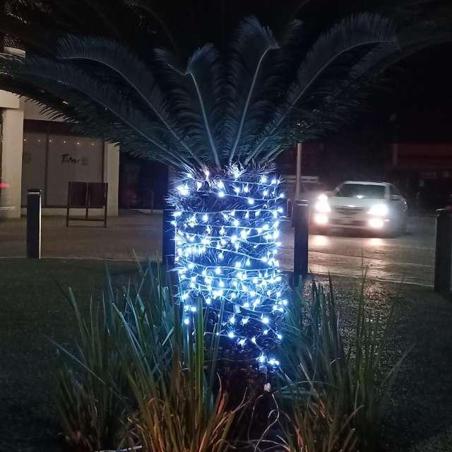 Palma iluminada