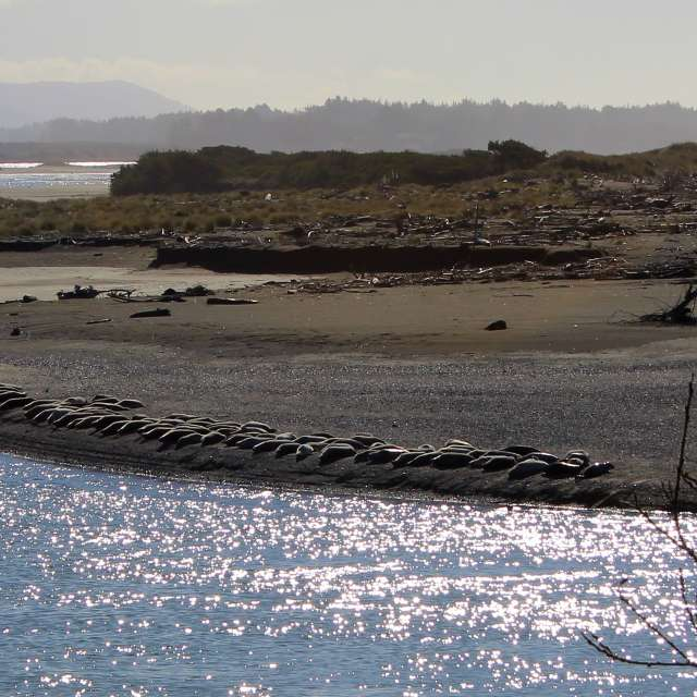 Smith River and Harbor Seals