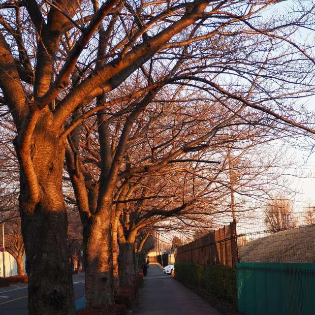 調布空港近くの通り木々