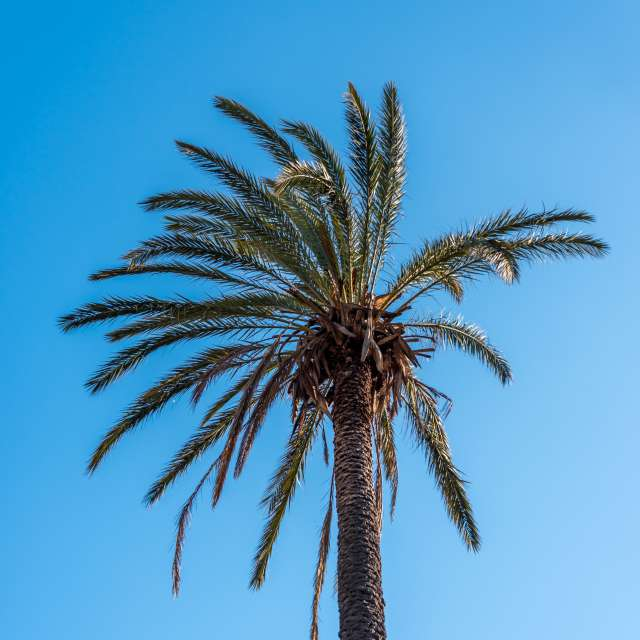 Palm and Clear Blue Sky