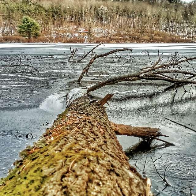 Ice, nature, pond