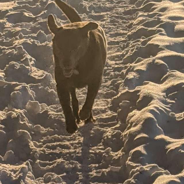 Freude über seltenen Schnee