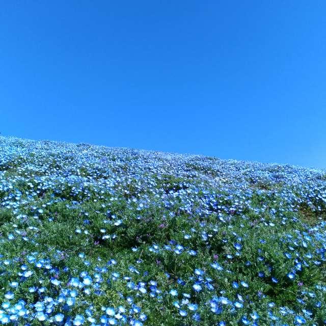 BLUE/Ibaraki(2019/04/13)