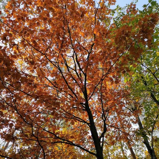 Jesień w Zalasewie