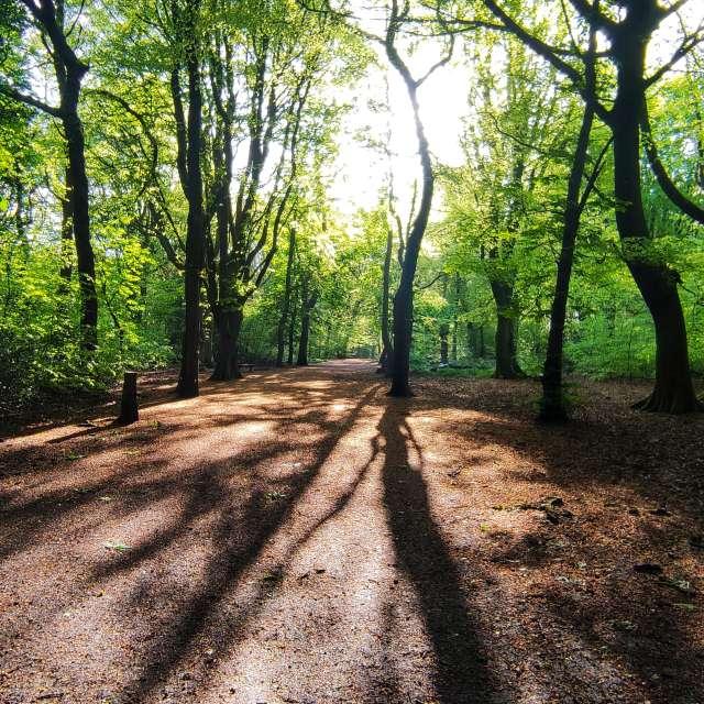 Sunrays through trees
