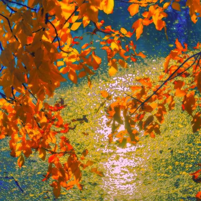 Autumn coast. Park lake.