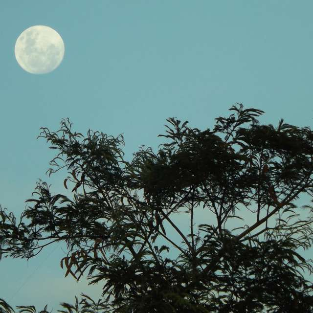 Lua a Tarde