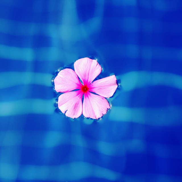 プールに浮かぶ花