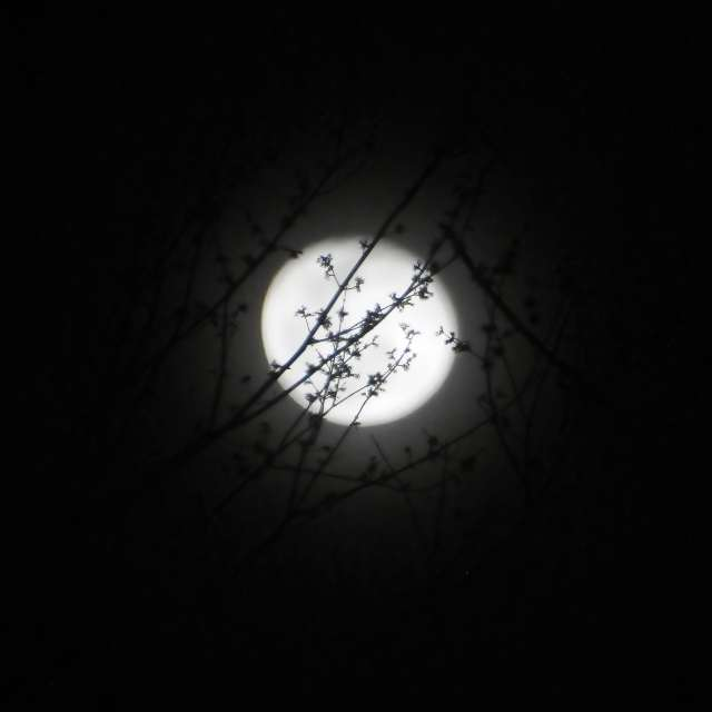 Full Moon in Flower